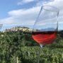 FINOVINO Sloveense wijnen –  vegan rose